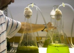 Microbubbles Enable More Efficient Production Of Algae Biofuels