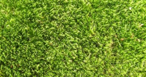 MIT Researchers Find a Way To Make Solar Panels from Grass Clippings